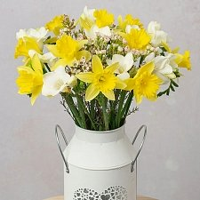 Daffodils and Freesias Delivery UK