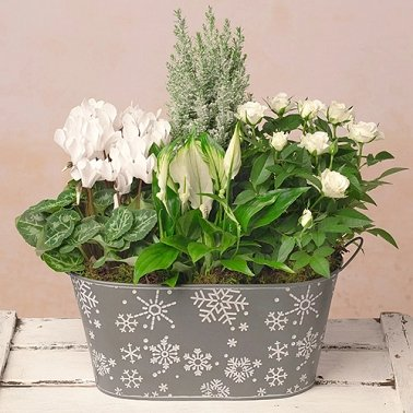 Frosty Flower Planter Delivery to UK
