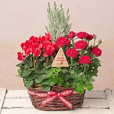 Winter Flower Basket delivery to UK [United Kingdom]