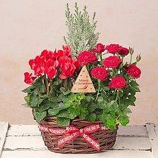 Winter Flower Basket delivery to UK [United Kingdom]