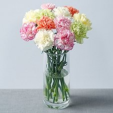 12 Classic Carnations delivery to UK [United Kingdom]