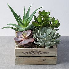 Mixed Succulents in Crate by Post delivery to UK [United Kingdom]