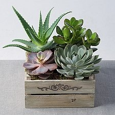 Mixed Succulents in Crate Delivery to UK [United Kingdom]