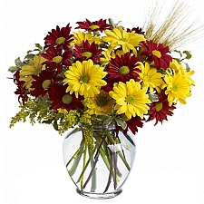 Fall Daisies delivery to Canada