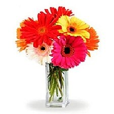 Gorgeous Gerberas delivery to Canada