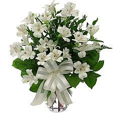 White Peruvian Lilies delivery to Canada