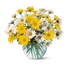 Dashing Daisies Delivery to UAE