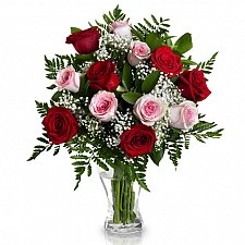 12 Red and Pink Roses