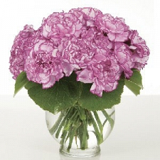 Pink Carnations in a Vase delivery to Malaysia