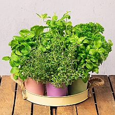 Grow Your Own Herb Garden Delivery to UK