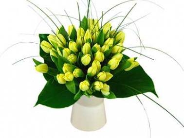 50 Lemon Tulips