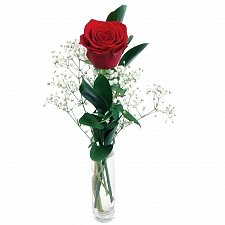 Red Rose delivery to UK [United Kingdom]