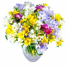 40 Fragrant Freesias delivery to UK