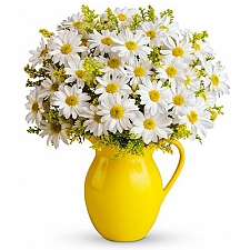 Sunny Day Pitcher of Daisies delivery to United States