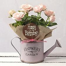 Happy Birthday Rose Gift