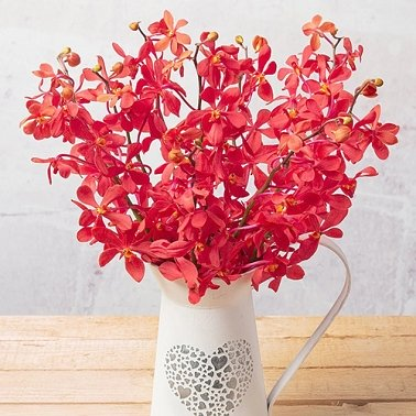 Mokara Orchids Delivery to UK