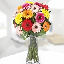 Gerbera Delight delivery to Latvia