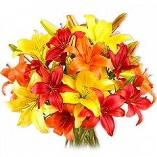 Mixed Asiatic Lilies delivery to Kuwait